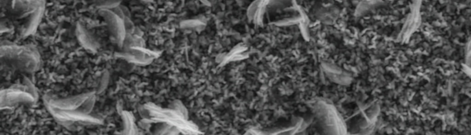 Fig. 10: SEM image of a deposit obtained with SWPO for EU = +0.40 V.