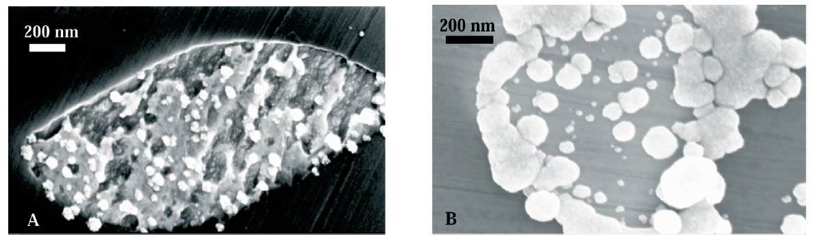 Fig. 2: Gold deposits obtained on NiAl-Re by application of...