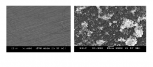 Fig . 8: SEM images of (a) freshly polished surface, (b) corroded surface