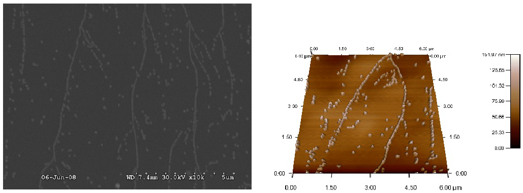 Fig. 7: SEM and AFM images of copper electrodeposited from 2 mM on HOPG at a distinct deposition potential of –0.1 V Ag/AgCl for 60 s