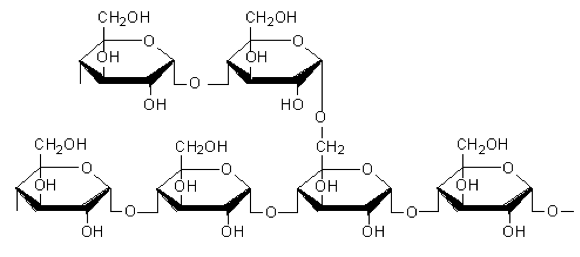 Fig. 11(b): Structure of amylopectin
