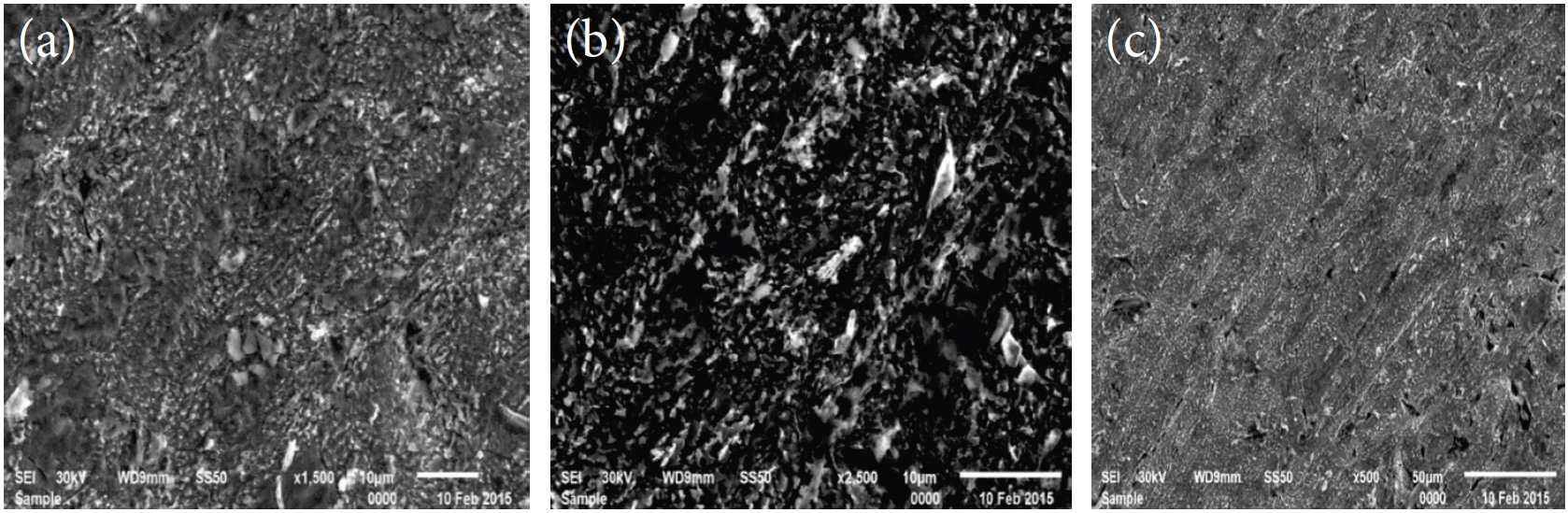 Fig. 9a-c: SEM micrographs of copper surface (a) before of immersion in 1 M HNO3, (b) after 48 h of immersion in 1 M HNO3, (c) after 48 h of immersion in 1 M HNO3+ 11x10-6 M of Rosmarinus extract at 25°C