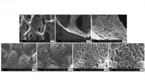 Fig. 5: SEM images of electrodeposited Li on Ni foam at 0.5 mAcm-2 for 10 min