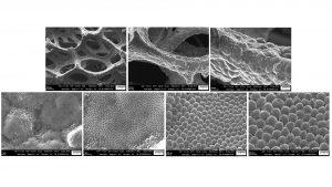 Fig. 7: SEM images of electrodeposited Li on Ni foam at 1 mAcm-2 for 10 min
