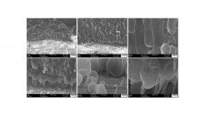 Fig. 8: Cross-section SEM images of electrodeposited Li on Ni foam at 0.1 mAcm-2 for 10 h